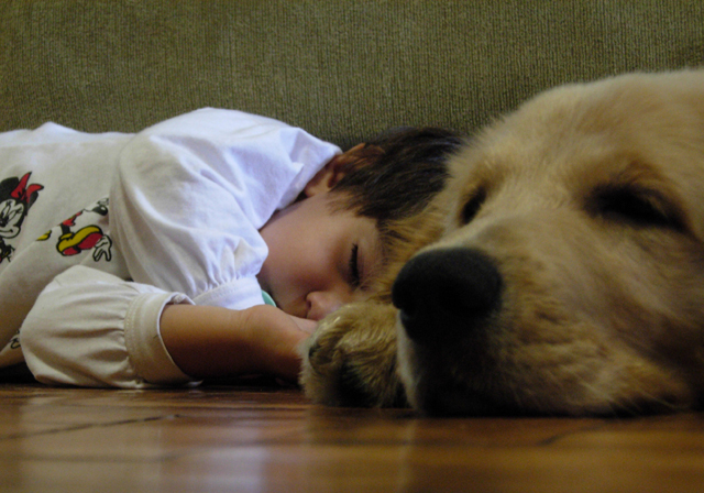 Boy and dog sleep_stock.xchng