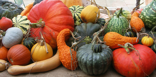 Pumpkins_freeimages