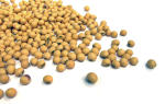Soya, benefits and risks